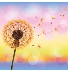 Dandelion on background of sunset vector image vector image