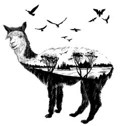 alpaca for your design vector image vector image