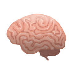 human brain icon flat style internal organs vector image