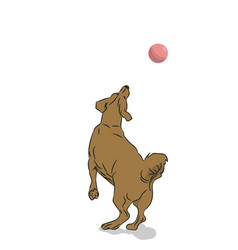 dog catches ball vector image