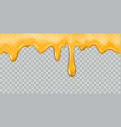 Dripping honey dripping syrup honey drippings vector