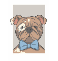 emglish bulldog vector image