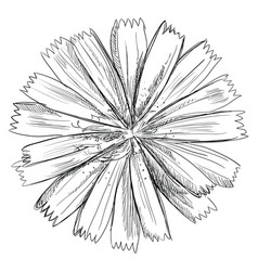 hand drawing flower 2 vector image