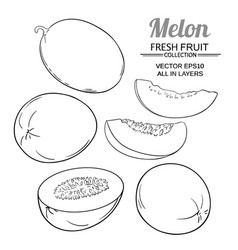 Melon set vector