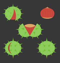 chestnut icon vector image