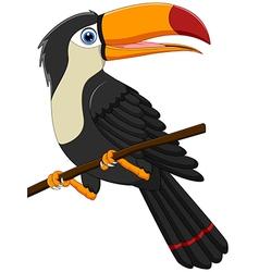 Cute toucan bird cartoon vector
