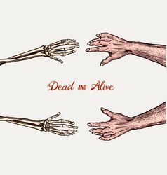 Human and skeleton hands bony arm dead and alive vector