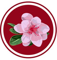 Pink azalea vector