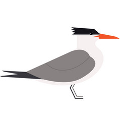 sea birds royal tern isolated object vector image