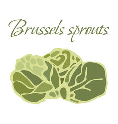 tasty veggies brussels vector image