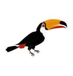 toucan bird flat design vector image vector image