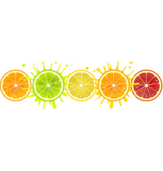 Banner with citrus fruits vector