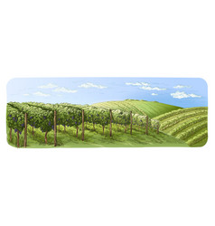 colorfull vine plantation hills trees clouds on vector image