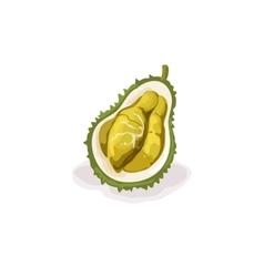 Tropical dragon fruit vector