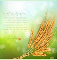 Background with gold ears wheat and sun rays vector