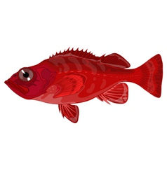 Grouper vector