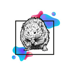 hand drawn hamster with frame and abstraction vector image