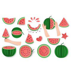 Watermelon whole half and cut set isolated on vector