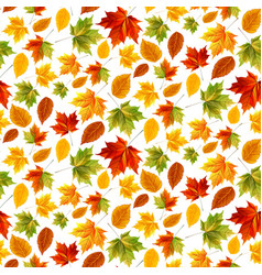 autumn maple leaves effect sun glow vector image