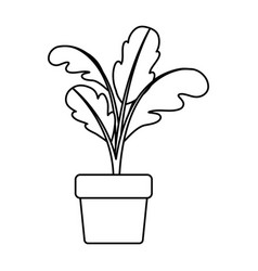 Black silhouette of beet plant in flower pot vector