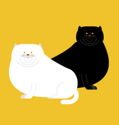 Fat white and black cat isolated big thick pet vector