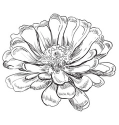 hand drawing flower 6 vector image