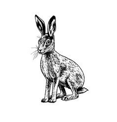 hand drawn hare black white sketch vector image