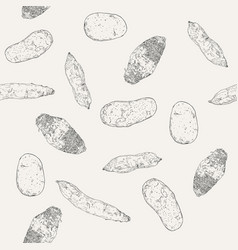 hand drawn sketch taro sweet potatoes and potato vector image