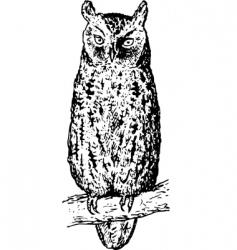owl otus vector image