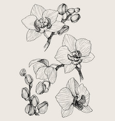 set of hand drawn black outline orchid on a white vector image