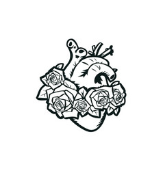 Anatomical heart with roses vector