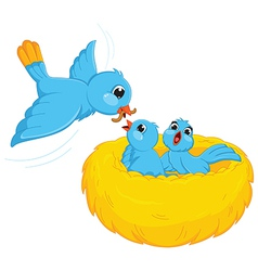 Bird Feed Babies vector