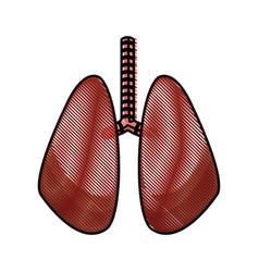drawing lung human organ healthy design vector image
