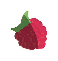 raspberry fruit fresh shadow vector image