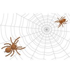 Two spiders of a tarantula on a cobweb vector