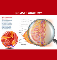 Woman breasts anatomy cross section aid banner vector