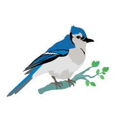 blue jay flat design vector image