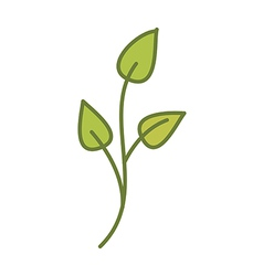 A plant vector