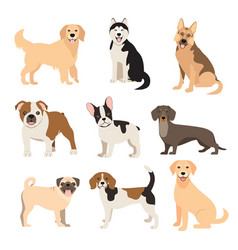 Flat style dogs collection cartoon dogs breeds vector