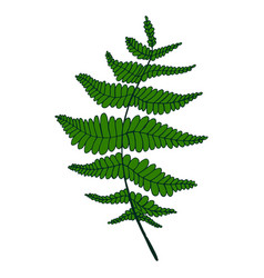 green fern leaf isolated pattern vector image