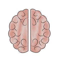 human brain idea innovation thinking memory vector image
