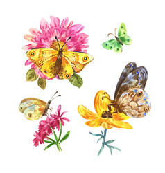 set watercolor butterflies on white background vector image