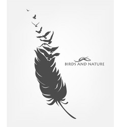 feather with flying flock of birds vector image vector image