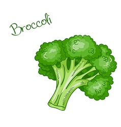 isolated cartoon fresh hand drawn broccoli vector image vector image