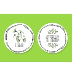 Ayurvedic herb - product label with ginkgo vector