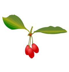 Cherries vector
