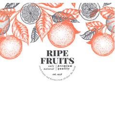 orange fruit design template hand drawn vector image