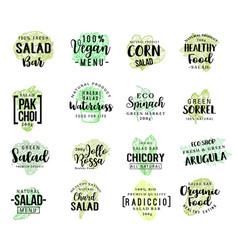 salads vegetables sketch lettering vector image
