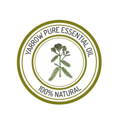 yarrow essential oil label aromatic plant vector image