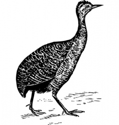 bird tinamiformes vector image